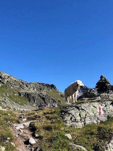 bergtocht Zwitserse Alpen